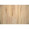 Painel Pinus